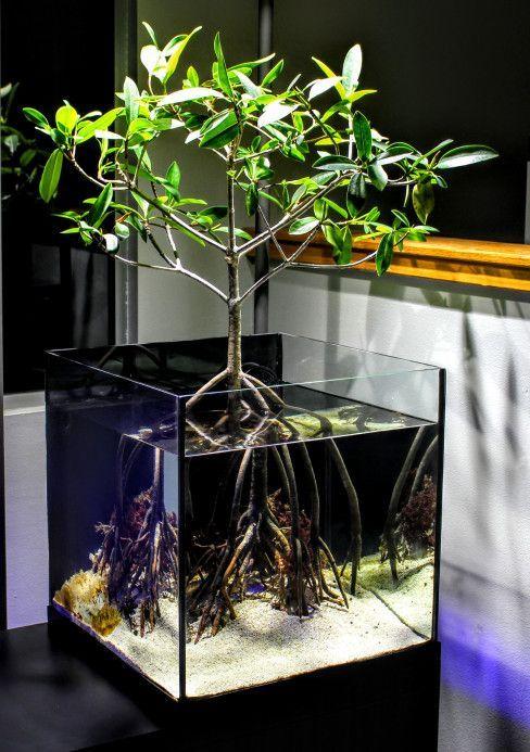 Piante Da Appartamento Per Acquario.45 Stunning Aquarium Design Ideas For Indoor Decorations Page 16