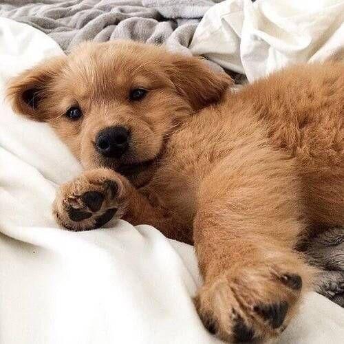 Cute Hunde Hundebabys Niedliche Welpen