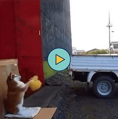 Cachorro ajudando a estacionar carro