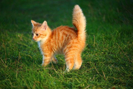 Katze, Kätzchen, Katzenbaby, Junge Katze, Rote Katze