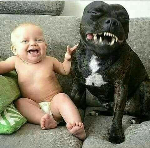 笑う犬と赤ちゃん