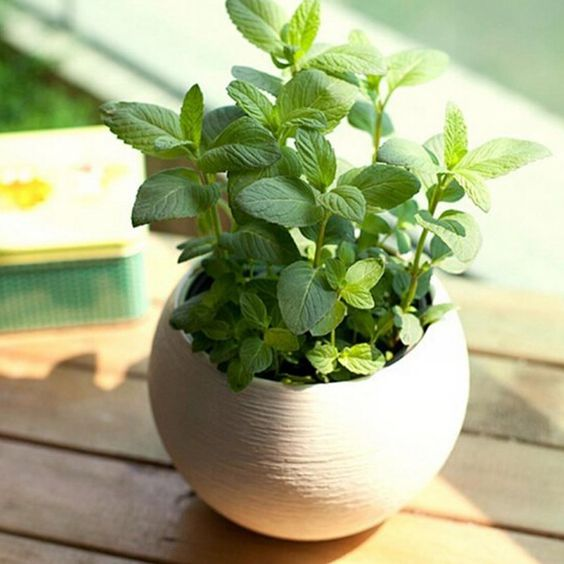 Oregano. Not only can you grow this all year long, but it's great for flavoring pretty much any vegetable that you cook!