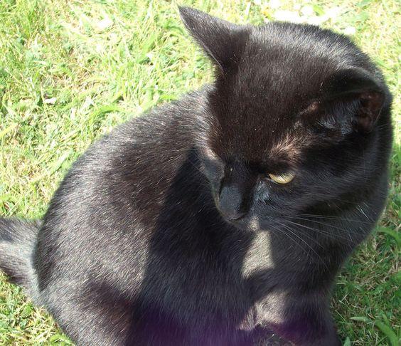 Milly #cats www.pinterest.com/annbri/