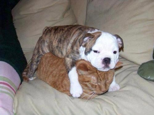 That doggy sure is testing that kitty. Or that kitty is just sleeping and the doggy is trying to sleep too. Either way, this is way too cute! More cute doggy and kitty pics here ------> http://lolpage.com/?p=4875
