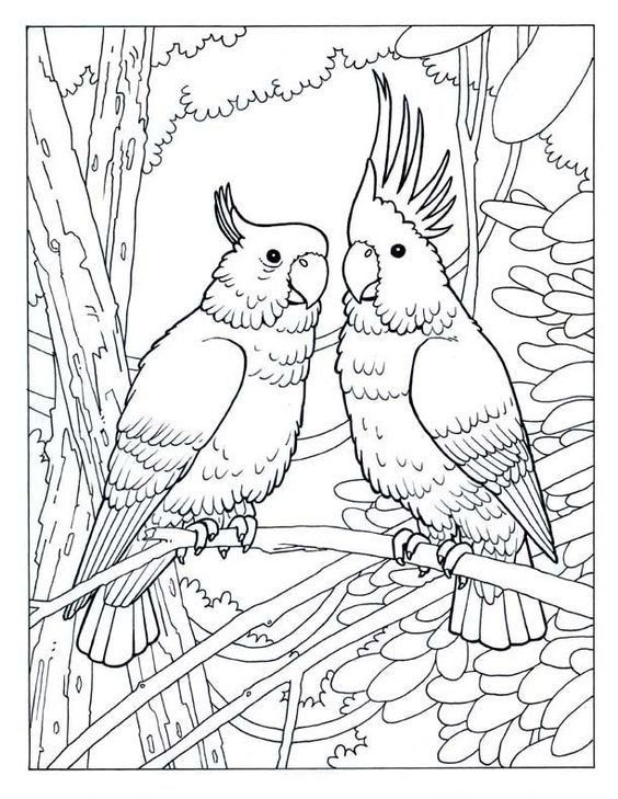 Omeletozeu Bird Coloring Pages Animal Coloring Pages Jungle Coloring Pages