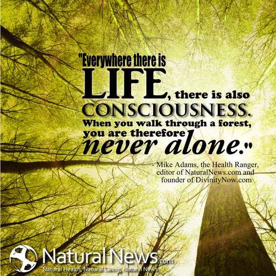 """Everywhere there is life, there is also consciousness. When you walk through a forest, you are therefore never alone.""  Mike Adams, the Health Ranger, editor of NaturalNews.com and founder of DivinityNow.com"