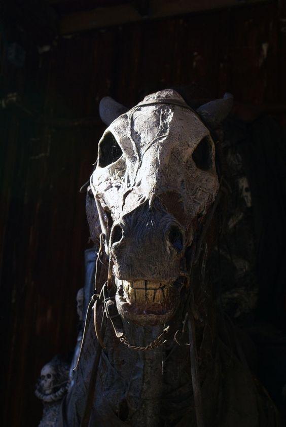 Skeletal Horse Photo - Visual Hunt