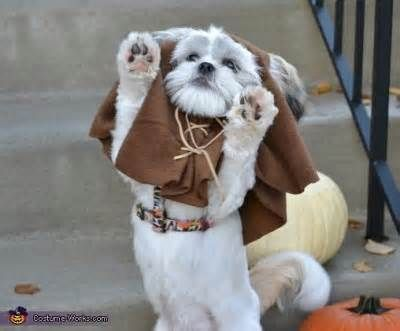 Ewok lhasa apso... just CUTE! :)--everyone always tells me Diva looks like an Ewok!: