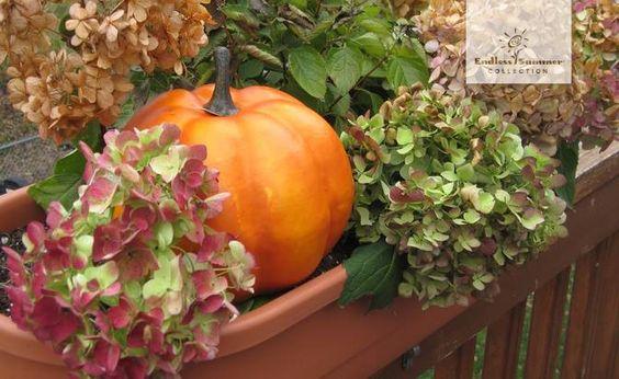 Passend zum gestrigen Ernstedankfest hier eine unserer Lieblingskombinationen in der kalten Jahreszeit: Die farbenfroh verblühenden Hortensien der Endless Summer® Collection zusammen mit herbstlichem Kürbisschmuck.