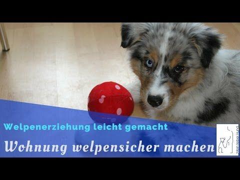 Die Wohnung Welpensicher Machen Welpenerziehung Welpen Welpenerziehung Hunde