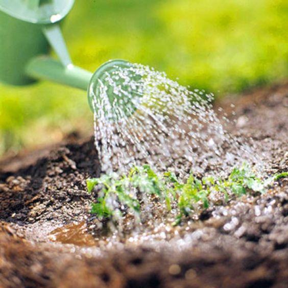 Gartengestaltungsideen regelmäßig pflanzenarten begießen