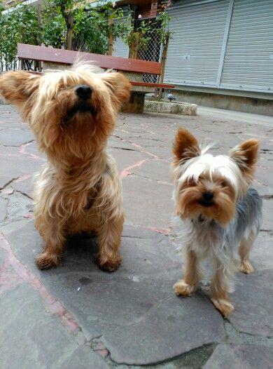 Mis preciosos perritos...