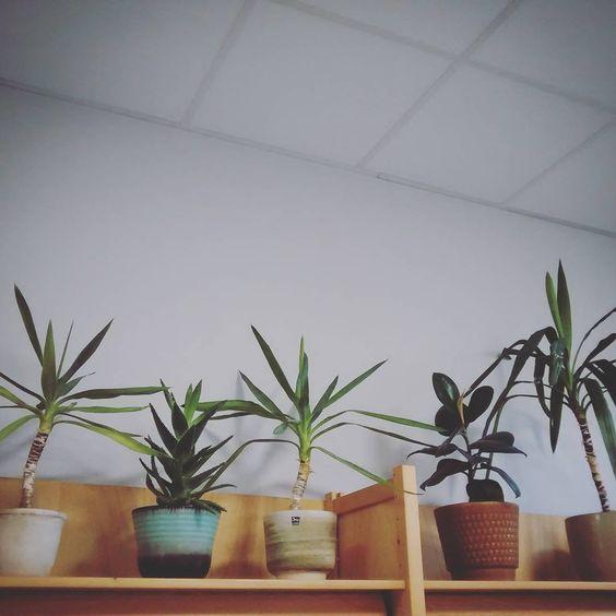 5-op-1-rij #plants