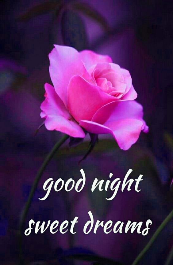 Good Night Image Lovely Good Night Good Night Love Images Good Night Flowers