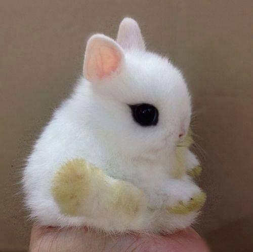 Tenderness in a drop, dwarf hotot bunny rabbit ✿⊱╮ grassy feet...: