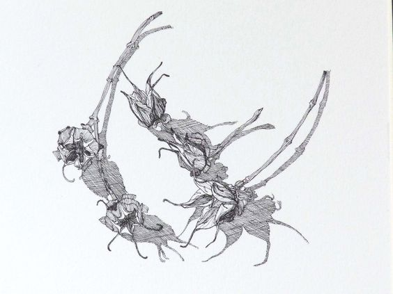 Dancing Seeds Unite (line drawing). Marigold Plunkett