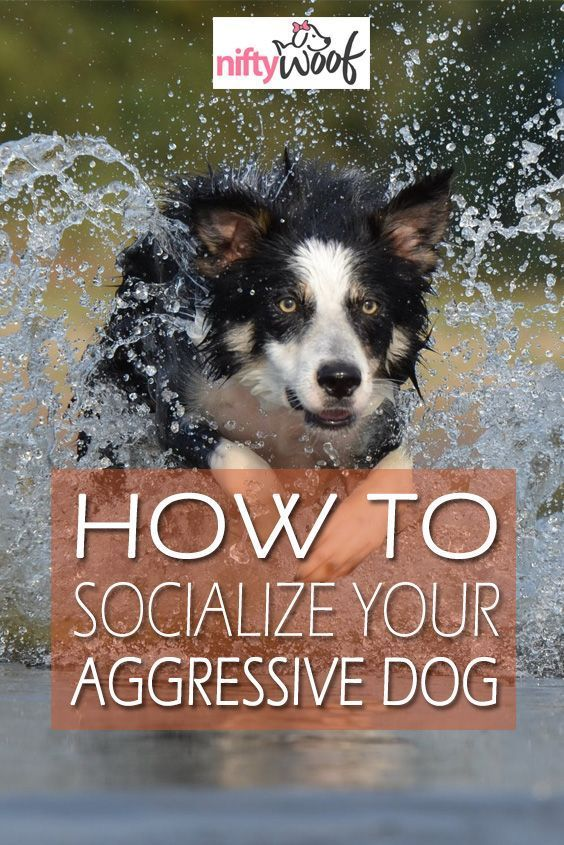Dog Training Help Dogtrainingtips 1534069951 Howtotrainapuppy