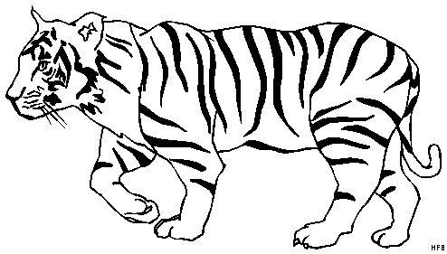 tiger ausmalbilder 07