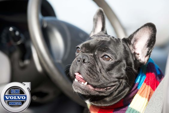 At Kline Volvo we welcome pets into our dealership and treat them as well as we treat our great customers!