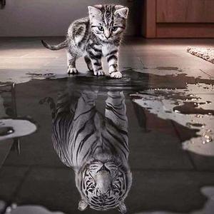 Cat Reflection Diamond Painting Kit - DIY