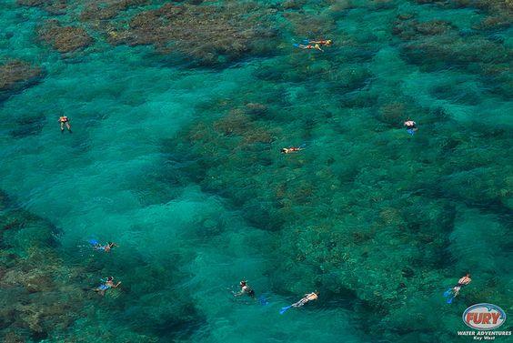 Snorkeling the Reef by FuryKeyWest, via Flickr