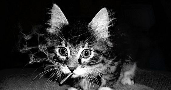 Join Truth In The #Finishit Campaign To End Smoking Tobacco Products Around Cats