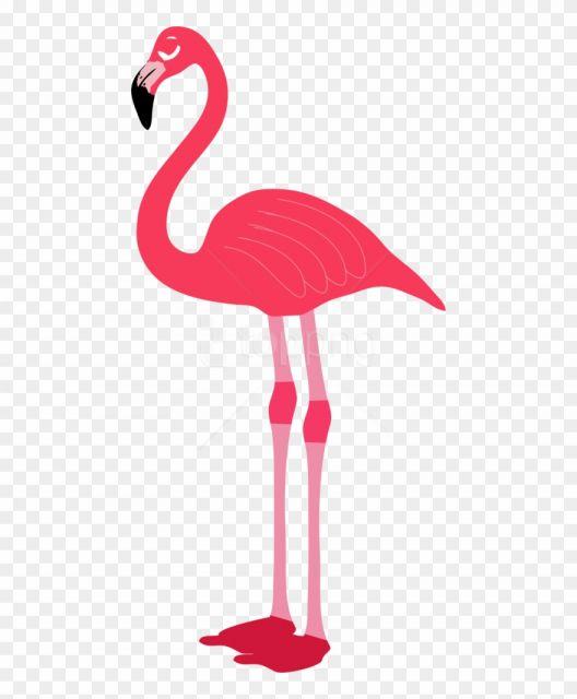 10 Flamingo Background Png Flamingo Illustration Image Icon Flamingo Clip Art