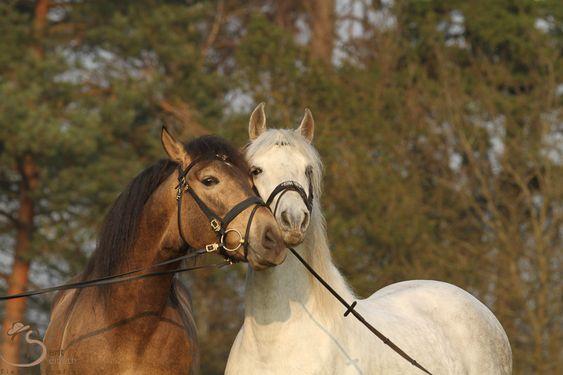 Startseite - spanische-pferde-deutschls Webseite!
