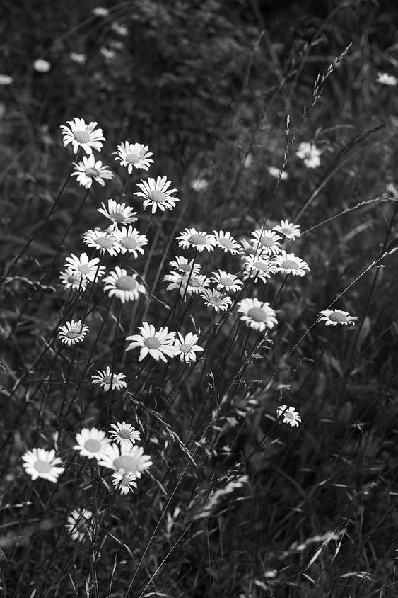 Black And White Aesthetic Wallpaper Grey Aesthetic Pictures For Wall Collag Black And White Picture Wall Black And White Landscape White Aesthetic Photography