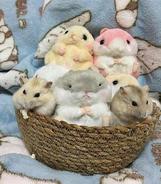 Hewan hamster