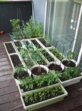 Pinterest the world s catalog of ideas for Balcony vegetable garden