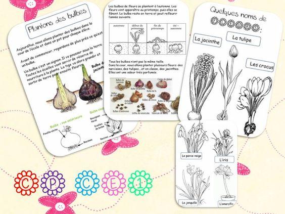 Plantons des bulbes la classe de corinne jardinage for Jardinage le monde