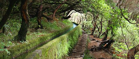 Wandern auf Madeira entlang den Levadas, den alten Wasserkanälen | Freizeitfreunde.de