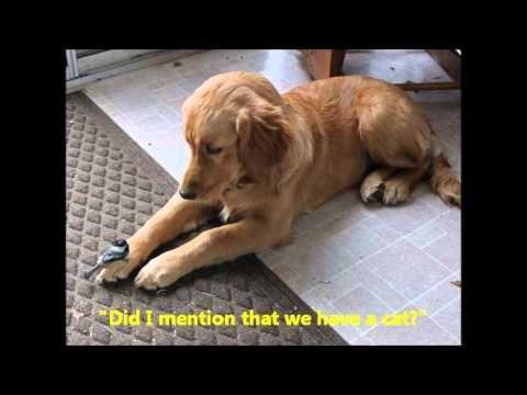 Maddie, a 5 month old Golden befriends a chickadee