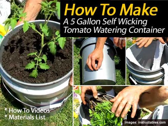 Gardens the o 39 jays and growing tomatoes on pinterest - Self watering 5 gallon bucket garden ...