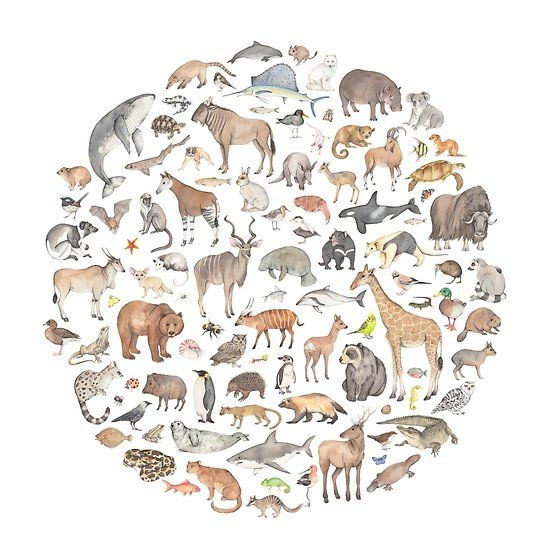 100 Animals Watercolour Animals In A Circle One Of My Best Selling Designs Available On Products From Redbubble Animal Pillows Duvet Covers Animals