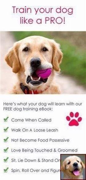 Dog Training Certification Dog Training Yakima Washington Dog