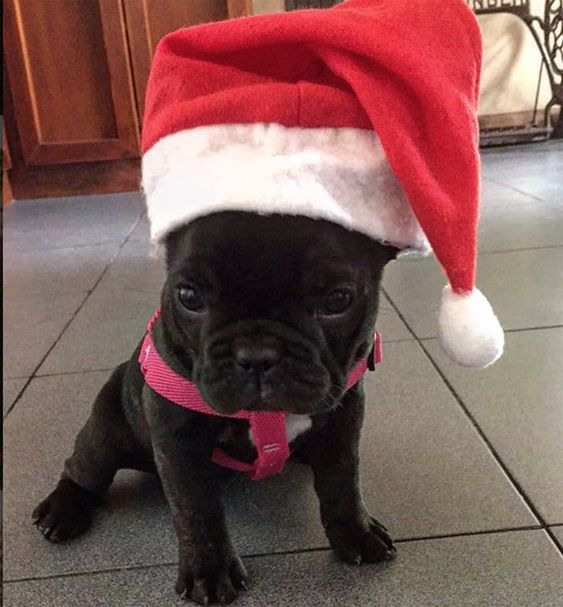 We would love to see your adorable pup all decked out for the holidays!
