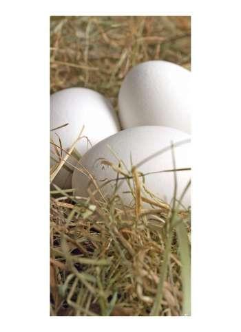 Eier im Heunest Motivdruck Papier