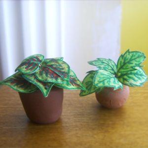 Plantas de Folhagem