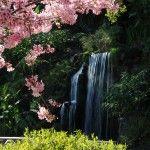L.a. County arboretum and botanical gardens