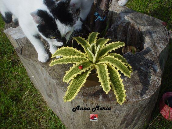 Piante grasse agave uncinetto amigurumi pinterest for Il blog di sam piante grasse