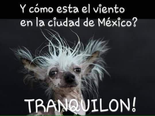 Pin De Miriam Diaz Arellano En Buenos Dias Fin De Semana Y Dia Mundial Del Perro Memes De Viento Voy A Reir
