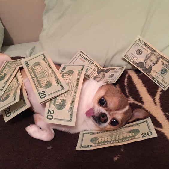 #moneydog