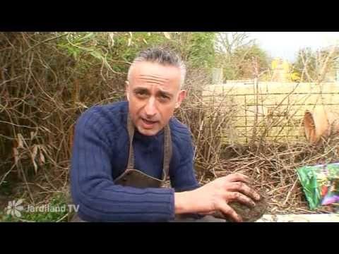 Préparer le sol du potager - abc Apprendre