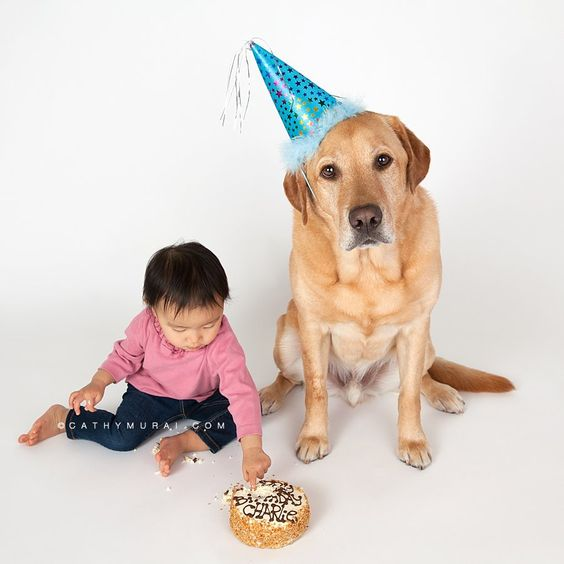 los angeles cake photos and photo sessions on pinterest on birthday cakes for dogs in los angeles