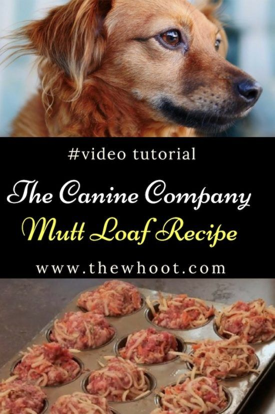 Mutt Loaf Recipe For Dogs Video Tutorial Dog Food Recipes