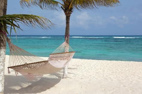 Photographic Print: Idyllic Beach with Coconut Trees and Hammock at Mexico by cristovao : 12x8in