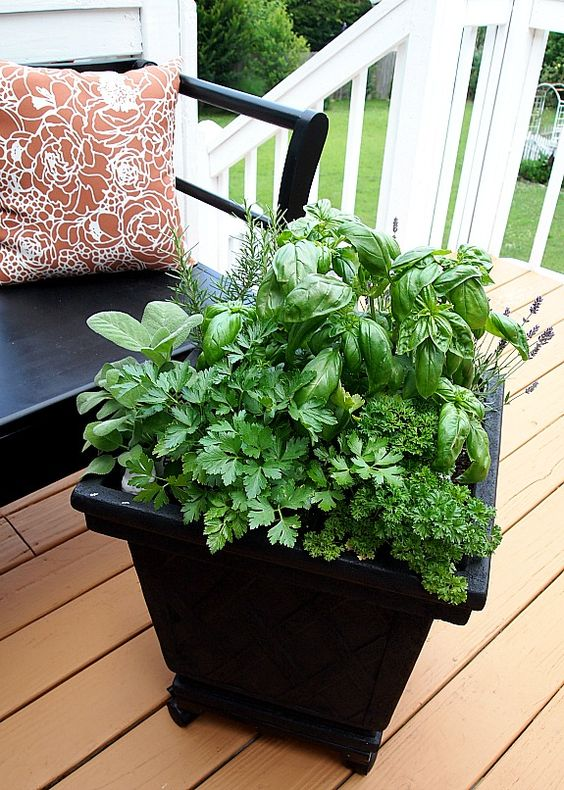 Tips for planting a container herb garden gardens container gardening and herbs garden - Herb container gardening ideas ...