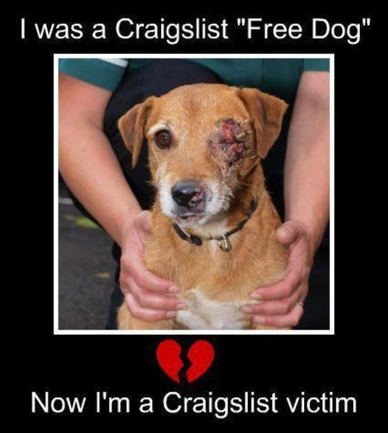 """Please Never Advertise Free Dogs & Cats.     A word of caution, to advertise on any list or website """"free dog/cat"""" is taking a huge risk with your animal. There are many unsavory people that will sell your pet for medical research, use them as bait dogs/cats or just the sick individuals that enjoy abusing animals. It is a harsh reality, but one that everyone should be aware of. It is best to network amongst friends or rescue groups to place an unwanted animal. Please share this information."""
